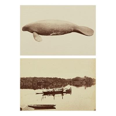 Instituto Moreira Salles traz de volta para o Brasil fotografias do Amazonas do século XIX de Albert Frisch